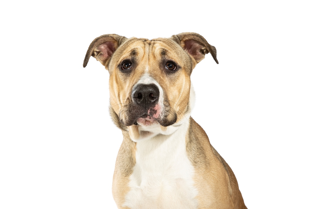 Adopt Sydney Dogs And Cats Home