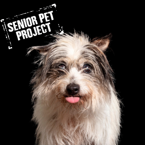 Adopt – Sydney Dogs and Cats Home