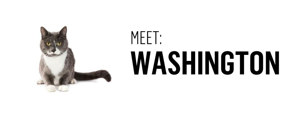 Meet Washington